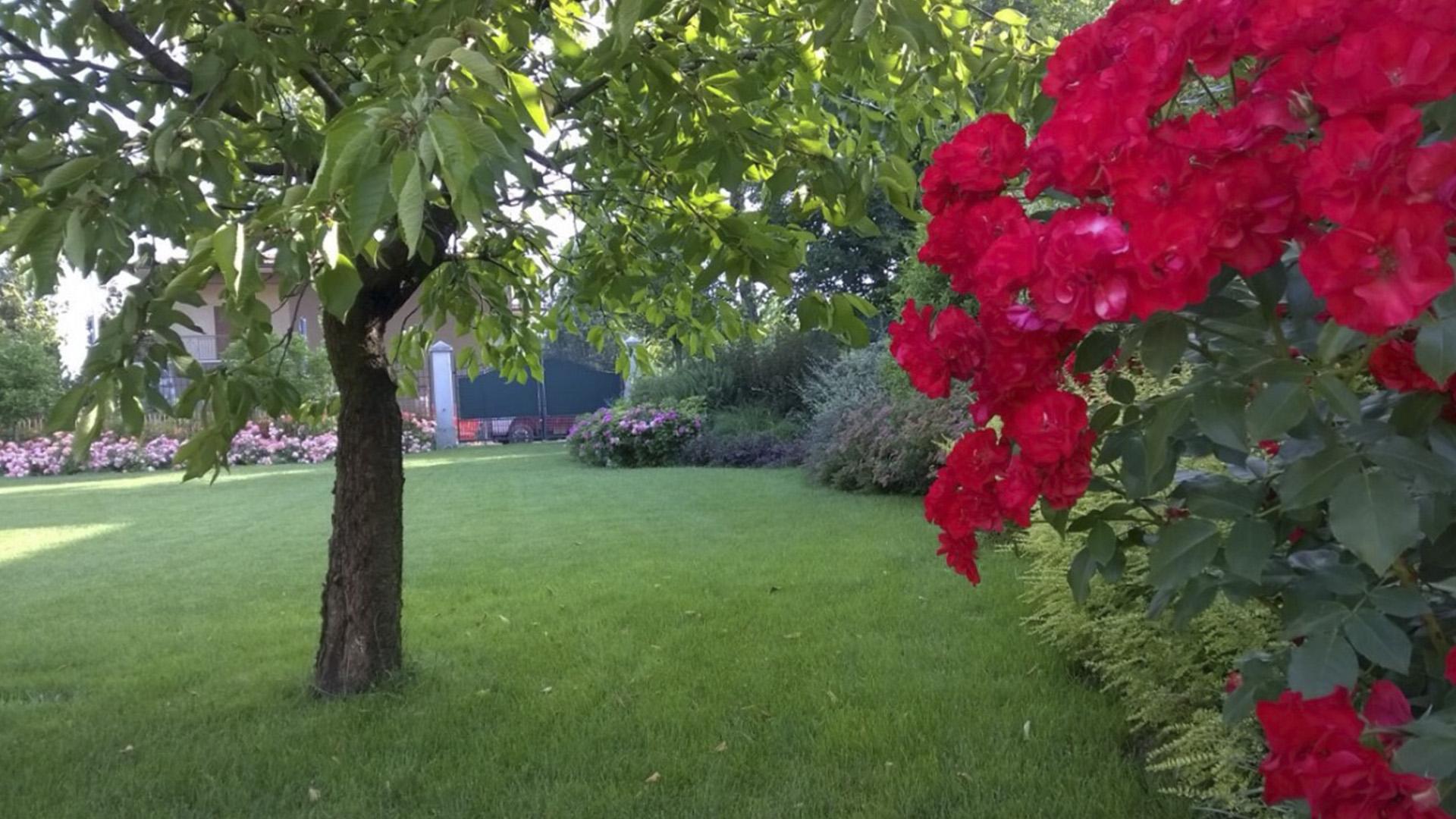 Giardino fiori rossi